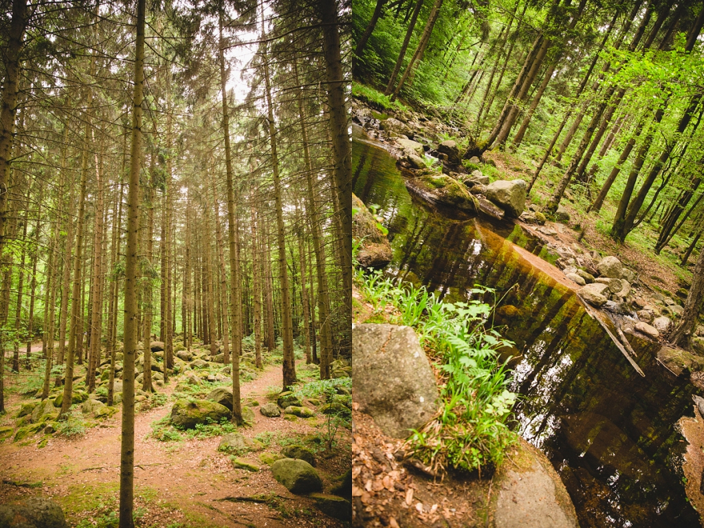Wald grün Bach Harz Location